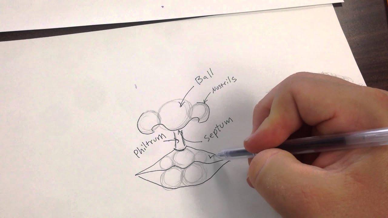Contour Line Drawing Eye : Contour line drawing nose and lips youtube