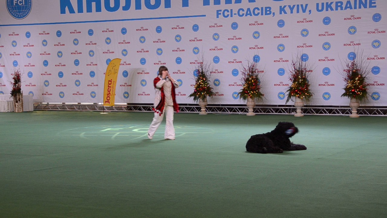 Беляева Ольга и РЧТ SIRENITI CRISHTALEVA MRIYA