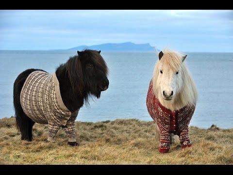 В МИРЕ ЖИВОТНЫХ Шетлендский Пони
