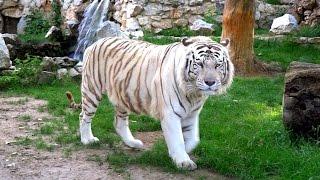 Belgrade Zoo (Serbia) FullHD