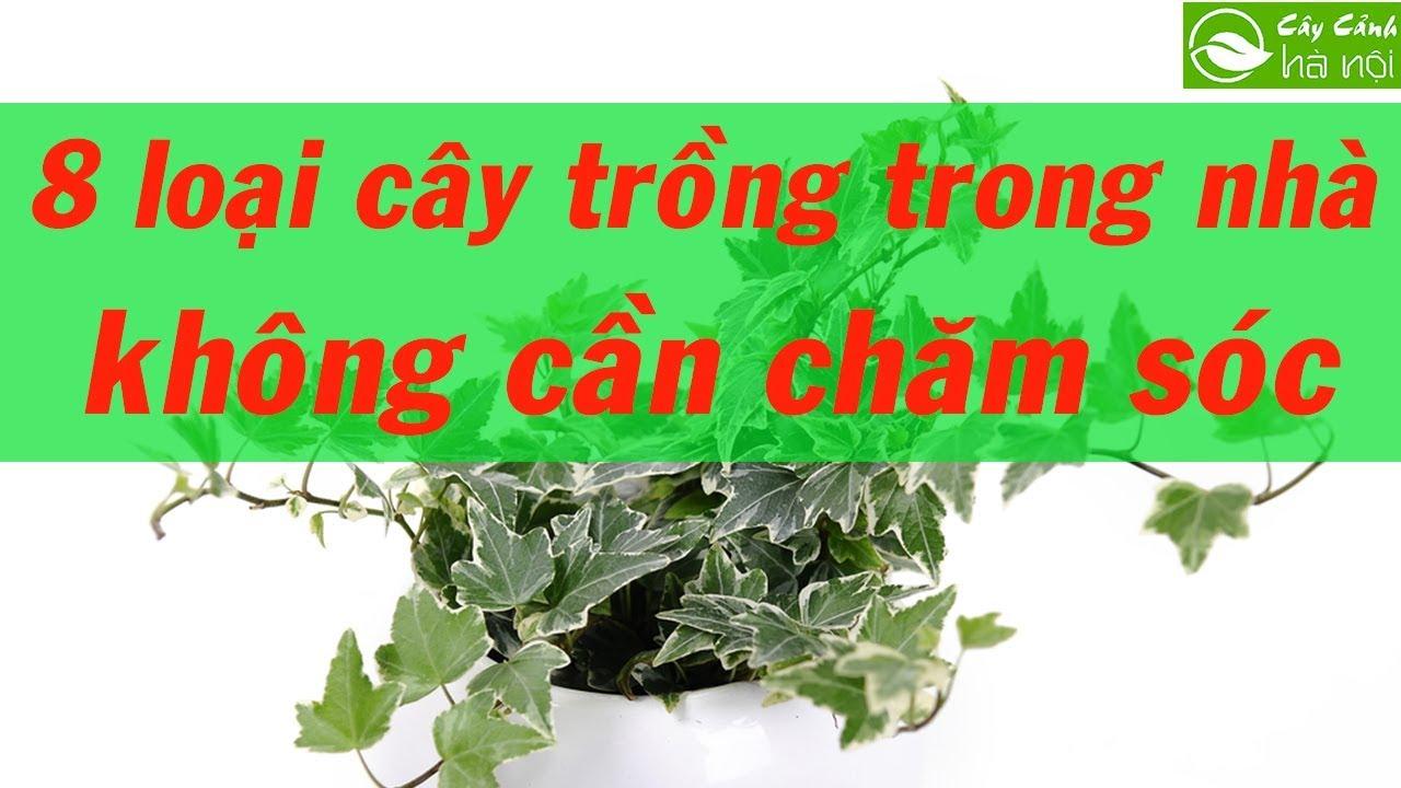 8 loại cây trồng trong nhà không cần chăm sóc