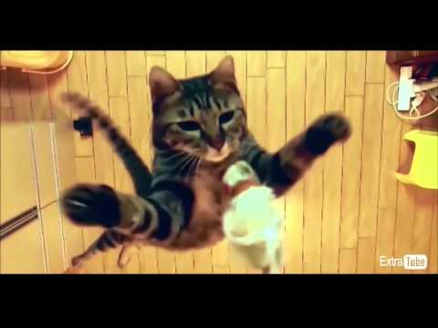 Best Funny Cats Compilation-Funny Fail Compilation/Best Funny Crazy Scary Pranks 2016