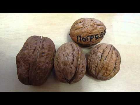 Грецкий орех Бабочка - Интернет магазин орехов и