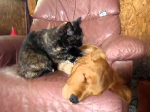 Cat Kneading Dog Youtube
