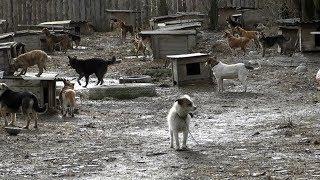 «Це геноцид тварин», - зоозахисники про умови утримання собак-безхатьок в притулку на Житомирщині