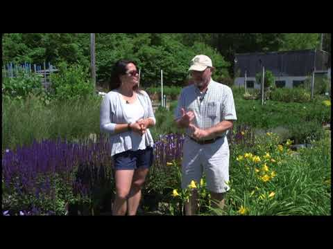 Home Gardener - Treating Insects Correctly