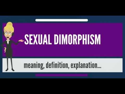 Secondary sexual dimorphism definition