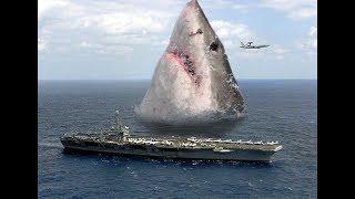 Топ 10 эпичных Фото с акулами   :)