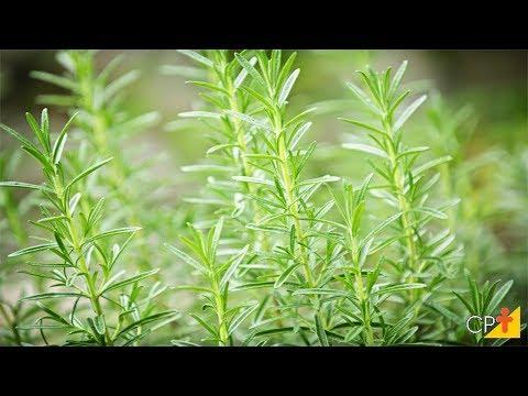 Clique e veja o vídeo Curso Plantas Medicinais e Aromáticas - Propagação por Sementes - Propagação Vegetativa - CPT
