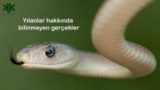 Yılanlar hakkında bilinmeyen gerçekler belgeselimiz