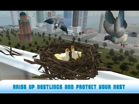 Flying Bird Pigeon Simulator 2 Android Gameplay HD