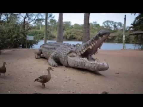 Tom Hallas Feeds A Crocodile | YWAM Together