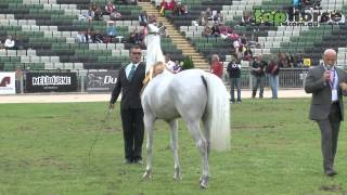 Equitana 2012: Arabian Parade of Champions