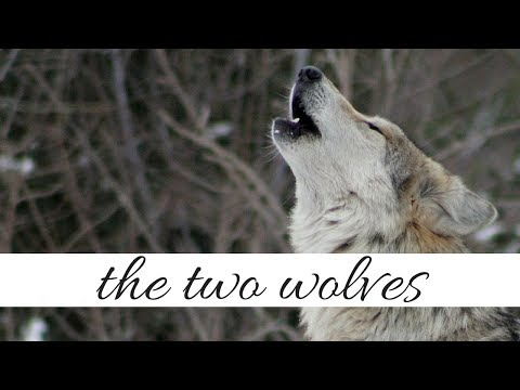 The Two Wolves | A Native American Legend