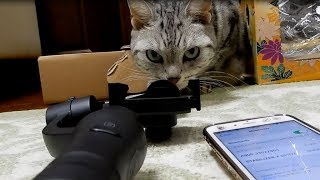 本当にスタビライザーは猫動画撮影に有効か…?〜検証結果Gimproはプロ仕様だった!