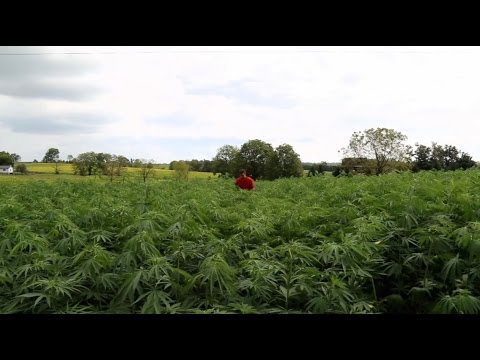 Why Kentucky farmers are quitting tobacco and turning to hemp