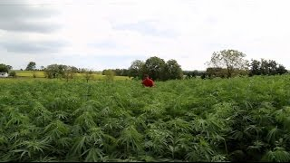 getlinkyoutube.com-Why Kentucky farmers are quitting tobacco and turning to hemp