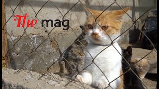 История приюта для бездомных животных