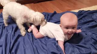 AWESOME BABY AND DOG FUNNY MOMENTS   @DAILY FAILS VIDEO 2020
