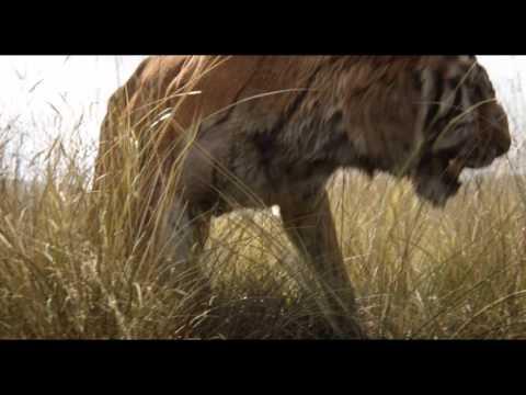 Le Livre de la jungle - Bande-annonce VF