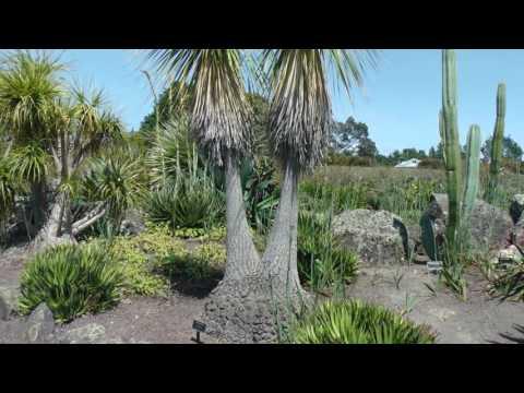 Neuseeland Teil 32, Botanischer Garten in Auckland - Musik Dr. Arnd Stein VTM