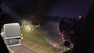 Shining For Deer Caught On Camera!