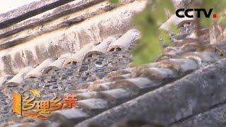 《乡理乡亲》 20200315 被破坏的40厘米滴水|CCTV农业