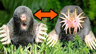 10 Most Dangerous Animals IN THE WORLD!