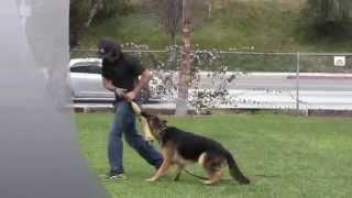 Wolfgang Rader German K9 Expert The Expert Dog Training