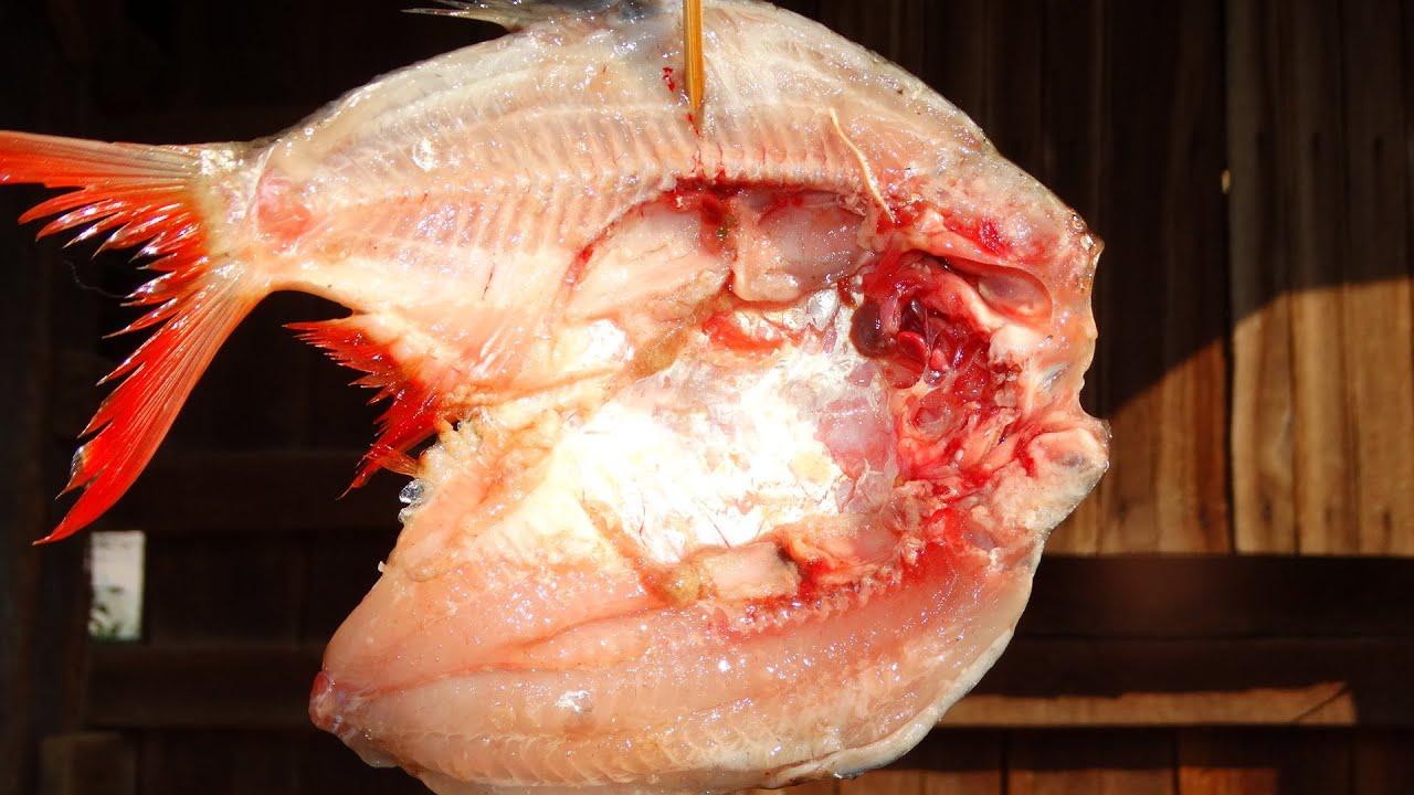 วิธีทำปลาแห้ง แบบหมักปลาให้แซบให้นัว