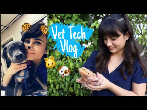 Ruptured Growth & Health Certificate|Day In The Life Of A Vet Tech|Vet Tech Vlog #6 ? thumbnail