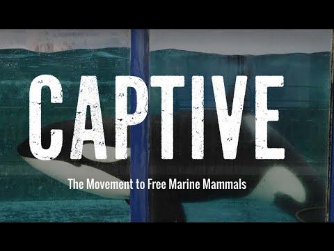 How Can We Free Marine Mammals Around the World? | Captive | Takepart