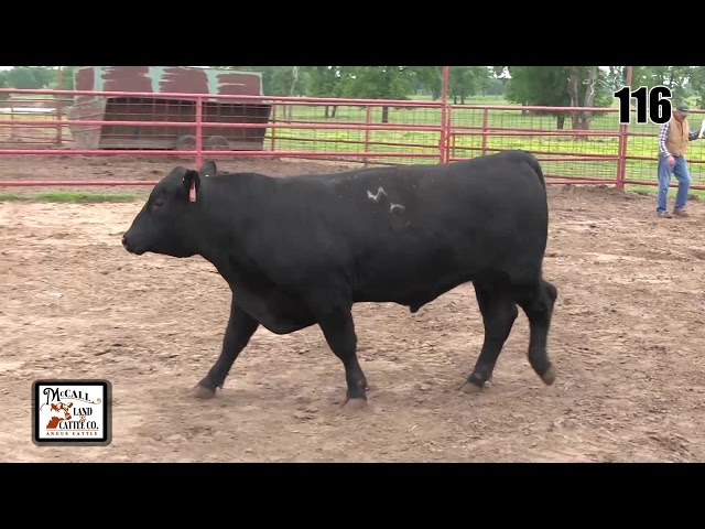McCall Land and Cattle Lot 116