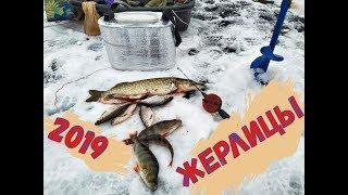Двойник в желудке На щуку в декабре 2019 Жерлицы рыбалка