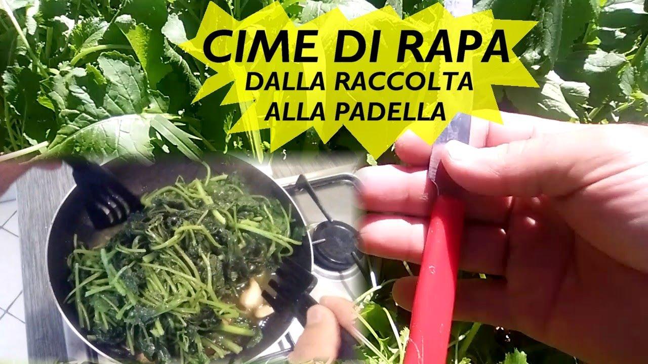 CIME DI RAPA DALLA RACCOLTA ALLA PADELLA - YouTube