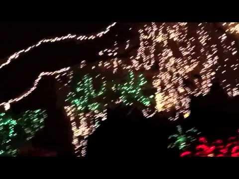 christmas lights miami # 79
