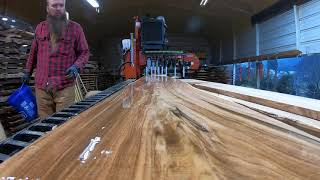 A Tree You've Probably Never Seen On A Sawmill Before,