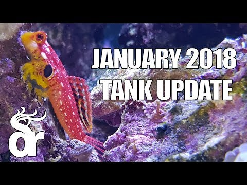 Tank Update | January 2018 - Red Sea Reefer 525 XL