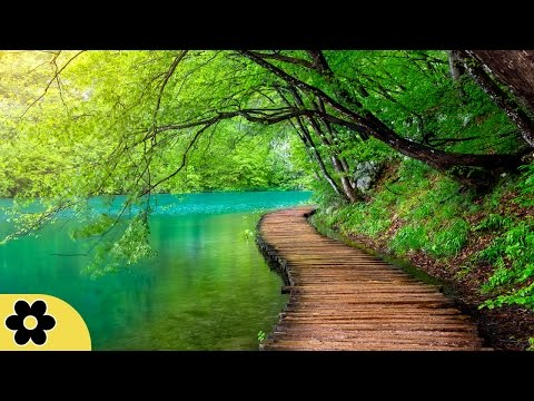 6 Hour Healing Music: Nature Sounds, Soothing Music, Calming Music, Relaxing Music, Soothing ✿2684C