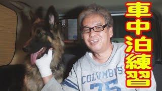 シェパード犬マック君自宅警備中でしたので 訪問してみました。 一日の...