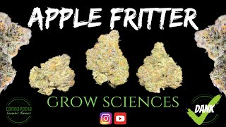 Apple Fritter Strain Review - Grow Sciences - Cannapedia