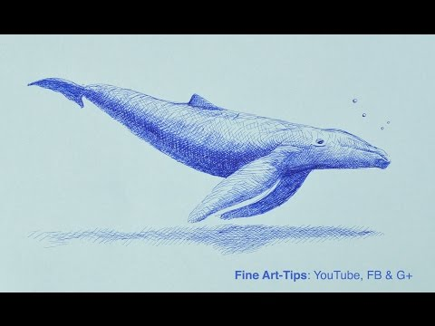 How to Draw a Whale With Fountain Pen