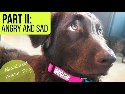 Abandoned Puppy | How I Cope with Anger & Frustration