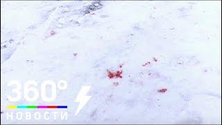 Жестокое убийство бродячей собаки произошло в Одинцово