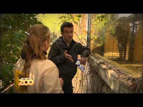 Une Saison Au Zoo - Petits rapaces, tigre et fourmilier (S1 Ep04)