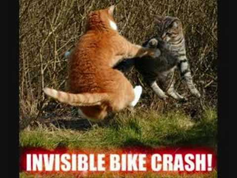 Funny Invisible Cat Pictures