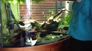 fish tank movie