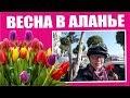 Турция: 8 марта в Аланье. Весна на дворе