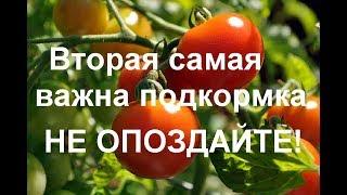 ВАЖНАЯ подкормка для увеличения урожая помидор и огурцов