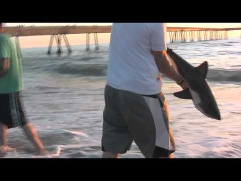 Baby Shark 911 - YouTube